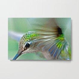 Green Hummingbird Portrait Metal Print