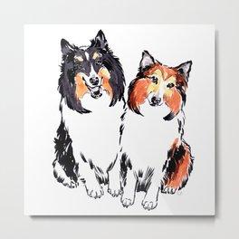 Shetland Sheepdogs Metal Print