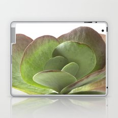 Succulent Big Leaf Laptop & iPad Skin