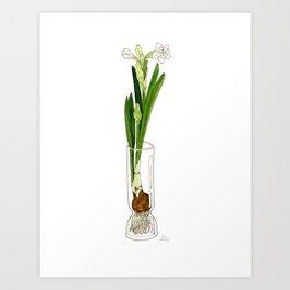 Paperwhite Bulb Art Print
