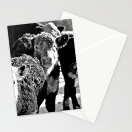 B&W Baby Cows Stationery Cards