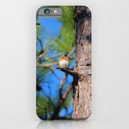 Bluebird On Little Branch iPhone Case