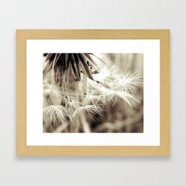 Dandelion seeds Framed Art Print