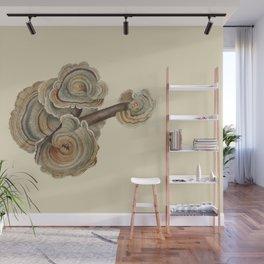 Polyporus versicolor Wall Mural