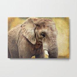 Elephant 4 Metal Print