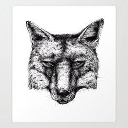 Portrait of a fox Art Print