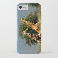giraffes iPhone & iPod Cases featuring Giraffes by Julie Hoddinott