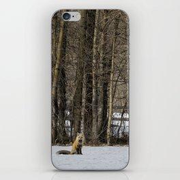 Beautiful Red Fox, No. 2 iPhone Skin