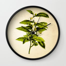 Tea Art Print, Kitchen Art Print, Natural History Poster, Natural History Botanical Art Print, Tea Tree, Tea Plant Art Print, Tea Leaves Art Wall Clock
