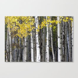 Yellow, Black, and White // Aspen Trees in Crested Butte Canvas Print