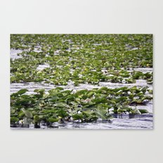 Frog crossing  Canvas Print