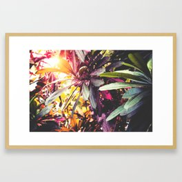 Tropical Trees Framed Art Print