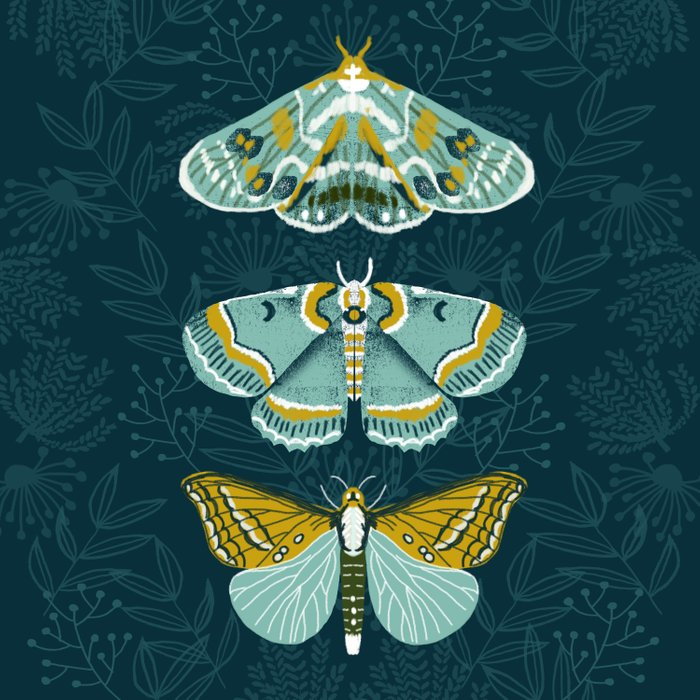 Lepidoptery No. 8 by Andrea Lauren  Duvet Cover