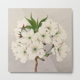 Cascade Fragrance Cherry Blossoms Metal Print