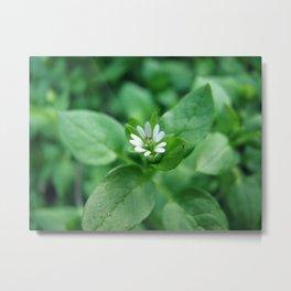 Tiny White Petals Metal Print