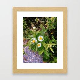Three Little Flowers Framed Art Print