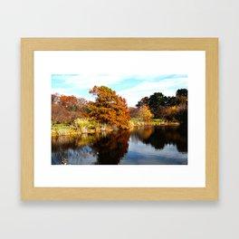 Arnold Arboretum Framed Art Print