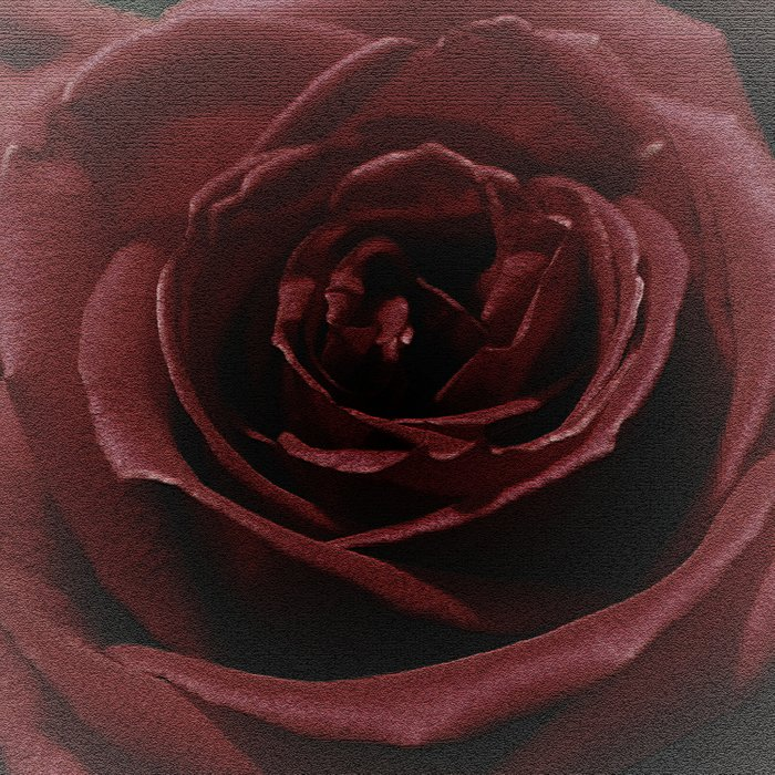 Textured Red Rose Comforters