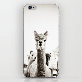 Tio Farm Alpaca 2 iPhone Skin