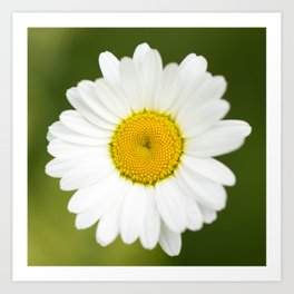 Beautiful Daisy Natural Green Background #decor #society6 #buyart Art Print
