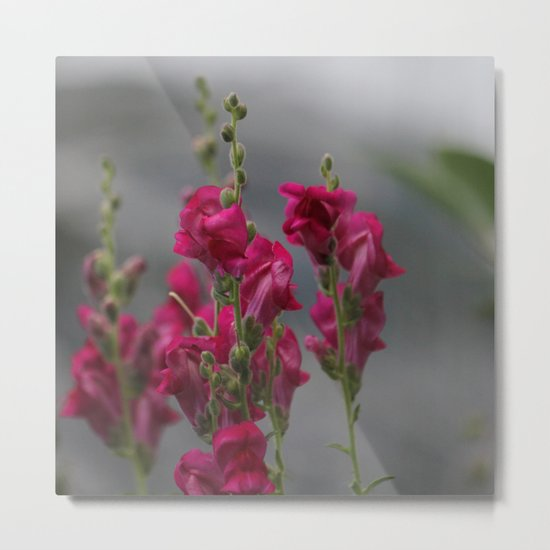 Bloom in Pink, Green, and Gray Metal Print