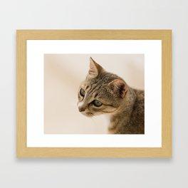 Cretan Cat Portrait Framed Art Print