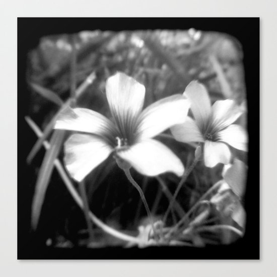 Oxalis - Through The Viewfinder (TTV) Canvas Print