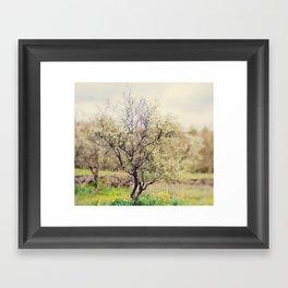 Lensbaby Spring  Framed Art Print