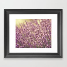 Sea of Purple Framed Art Print