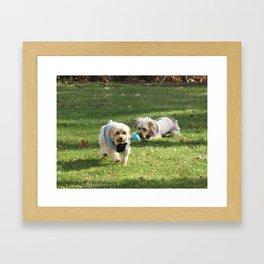 Copper & Penny Framed Art Print