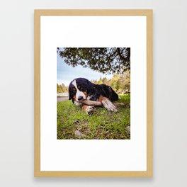 B the Berner Framed Art Print