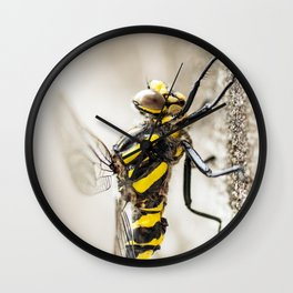 Beautiful yellow and black big dragonfly insect macro side view Wall Clock
