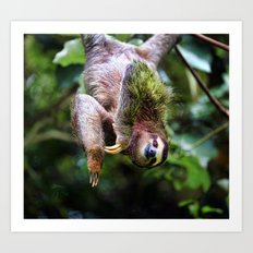 Three-Toed Sloth Art Print