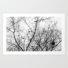 Nature in black and white Art Print
