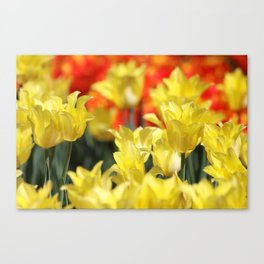 Floral Summer Glow Canvas Print