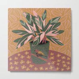 Stromanthe Triostar Houseplant Metal Print