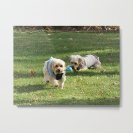 Copper and Penny Metal Print