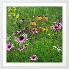 Meadow Flowers Art Print