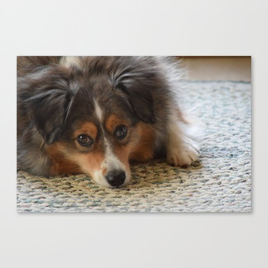 MiniAussie Mix Canvas Print