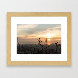 Fine looking weeds. Framed Art Print