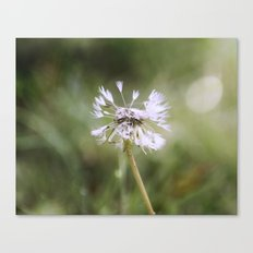 Seeds of the Dandelion Canvas Print