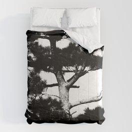 Kohama pine Comforters