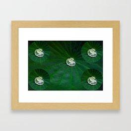 Water Droplets On Lotus Leaf  Framed Art Print