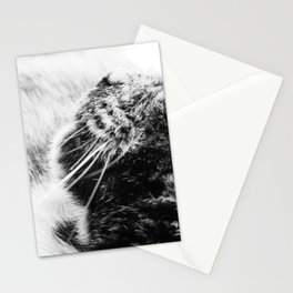 Whiskers Stationery Cards