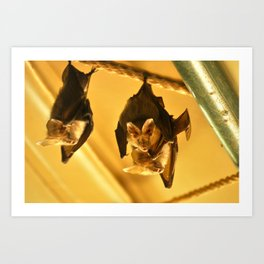 Fruit Bats Art Print
