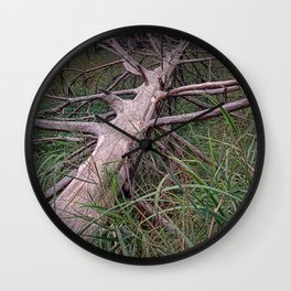 Fallen Pine Tree at Ludington State Park, Michigan Wall Clock
