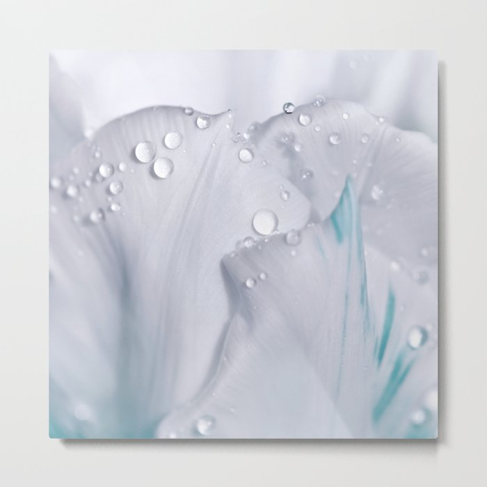 White tulip with water drops 27 Metal Print