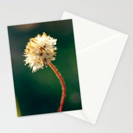 Morning's Dew Stationery Cards