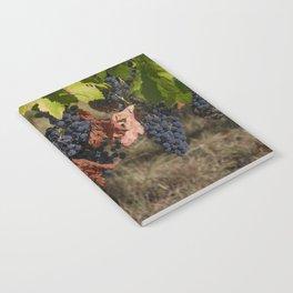 Vineyard Grape Clusters Notebook