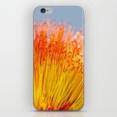 Tickle My Fancy iPhone & iPod Skin